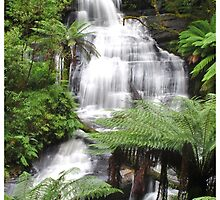 Triplet falls with Australian tree ferns by Fungiphile