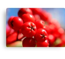 Rowan Berries Canvas Print