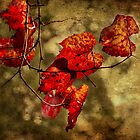 Autumn Leaves by Elaine Teague