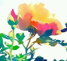 Garden rose by OlaG
