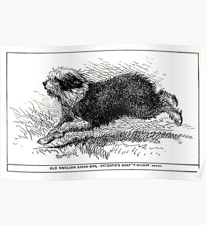 All about dogs a book for doggy people Charles Henry Lane 1900 0205 Old English Sheepdog_jpg Poster