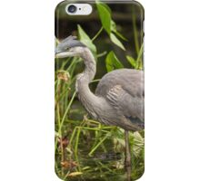 Great Blue Heron - Mud Lake, Ottawa, Canada iPhone Case/Skin