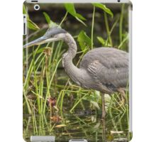 A Great Blue Heron fishing - Mud Lake, Ottawa, Canada iPad Case/Skin