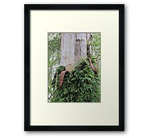 Fern-clothed Australian Gum trunk Framed Print