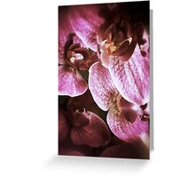 orchidaceae #3 Greeting Card