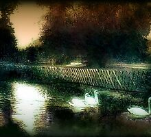 Swans on a river circa 1910 by cherylkerkin
