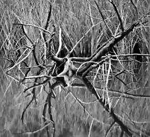Dead Wood by SuddenJim