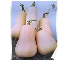 Bountiful Butternut Harvest Poster