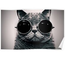 Cat with glasses poster Poster