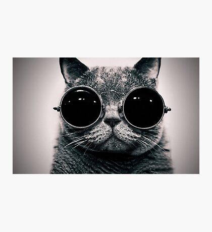 Cat with glasses poster Photographic Print