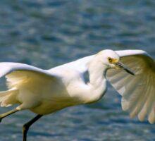 Snowy Egret inflight Sticker