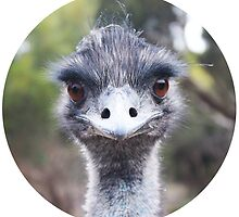 The Judging Emu - Comical Animals - Australia by Serena Star Leonard