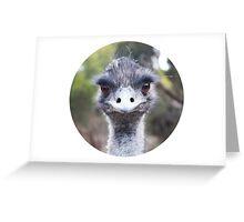 The Judging Emu - Comical Animals - Australia Greeting Card