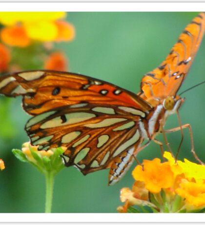 A little nectar..... Sticker