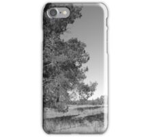 Pine Tree iPhone Case/Skin