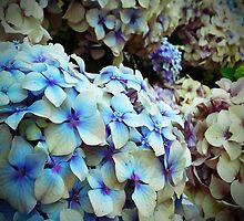 Hydrangeas bush by OlaG