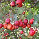 Berries for the birds by Carol Dumousseau