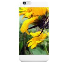 06 Orb Weaver Spider iPhone Case/Skin