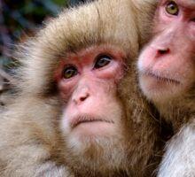Les frères macaques Sticker