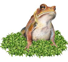 Grumpy Toad in Moss by paulapaints