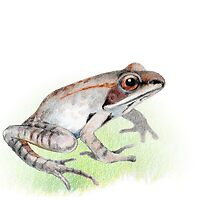 Wood Frog by paulapaints