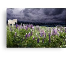 A Childs Dream Among Lupine Canvas Print