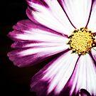 Purple Petals by Mounty