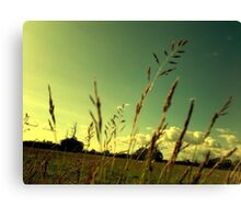 For Blue Skies... Canvas Print