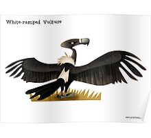 White-rumped Vulture Caricature Poster