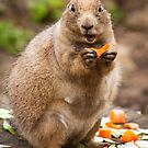 Prairie Dog by Ellesscee