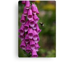 Foxglove and Bumble Bee Canvas Print