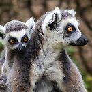 Lemurs - Mother and baby by Ellesscee
