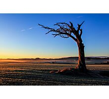A Tree, Taking A Bough. Photographic Print