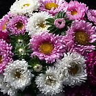 Bouquet of ASTERS ...  by OlaG