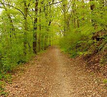 The Path by micahaefoto