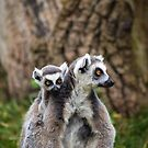 Lemurs - Mother and baby #2 by Ellesscee