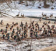 Who called this meeting, anyway? by PhotosByHealy