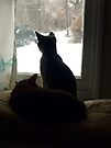 Kitty TV by Susan S. Kline