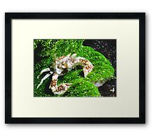 Porcelain Crab Framed Print