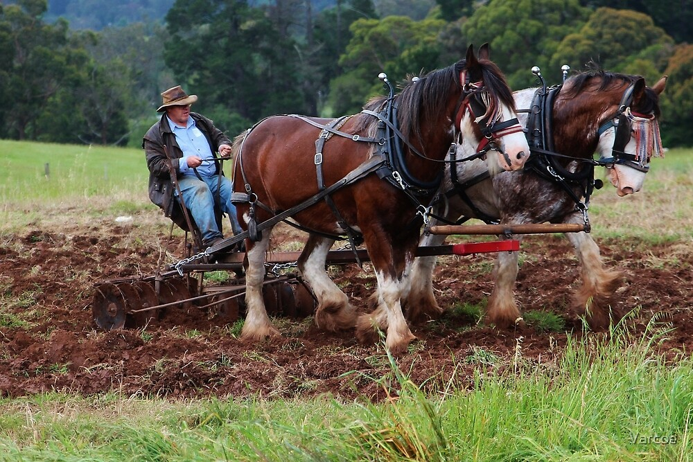 Horse & Driver team. by Jeanette Varcoe.