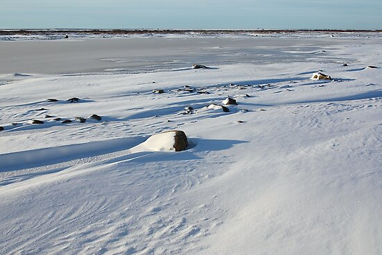 Early Morning on the Tundra, Churchill, Canada by Carole-Anne