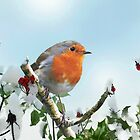 Robin Red Breast by Morag Bates
