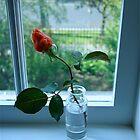Rosebud in vase by Maggie Hegarty
