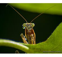 Praying Mantis 1 Photographic Print