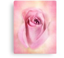 A beautiful Pink macro rose. Canvas Print