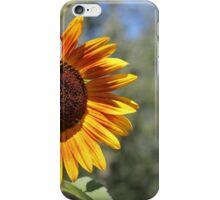 My Neighbor's Sunflower 1 iPhone Case/Skin