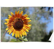 My Neighbor's Sunflower 1 Poster