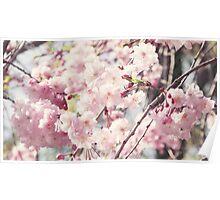 Beautiful sakura Poster