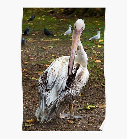 Pelican 2 Poster