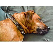Snoozing Pup Photographic Print